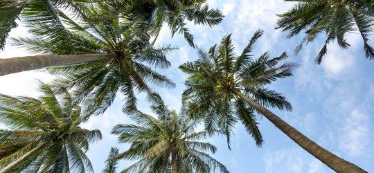 hurghada-palmy