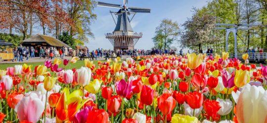 amsterdam-i-festiwal-tulipanow-wycieczka
