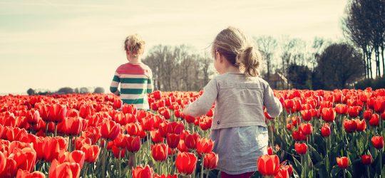 parada-kwiatów