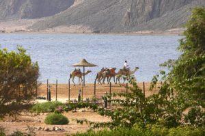 Happy Life Village Dahab