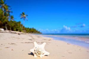 plaża muszla
