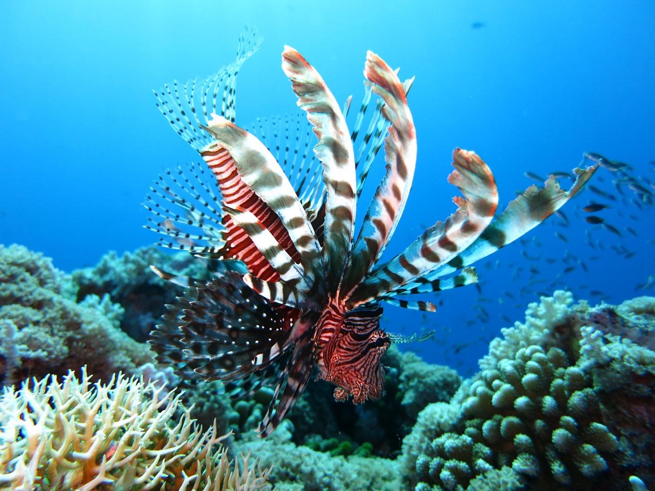 egipt rafa koralowa