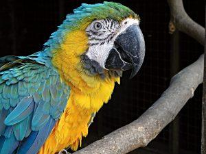 wakacyjna papuga