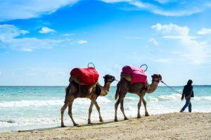Tunezja - Djerba